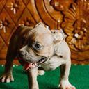 Puppy universe😍